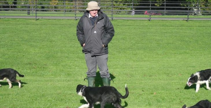 The Irish National Sheepdog trials start this week, but what does it take to train a good sheepdog?