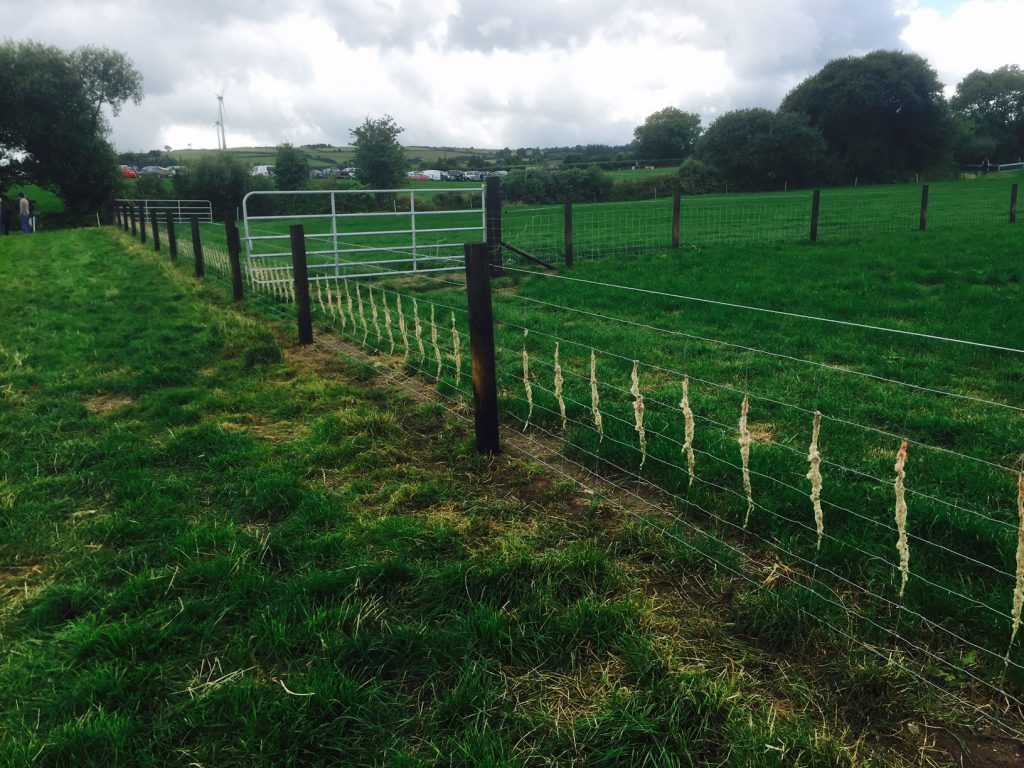 An example of permanent sheep fencing on John Doyle's farm