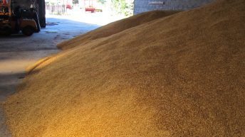EU grain storage capacity increases by 20% in 10-year period