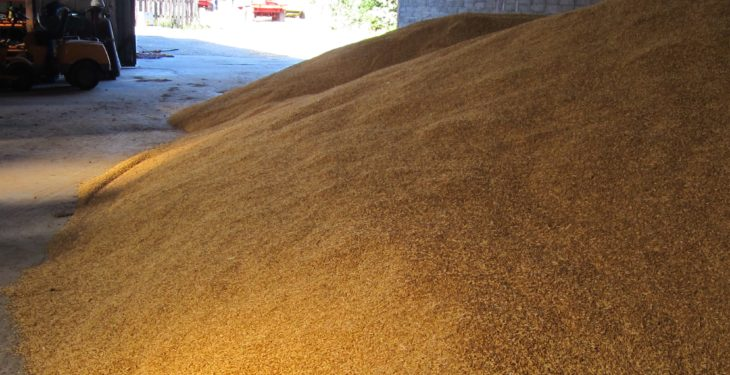 Grain price: Prices in the green this week