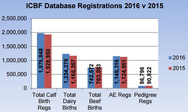ICBF calf births 08092016