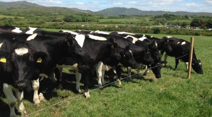 ICMSA calls for the immediate payment of EU milk reduction scheme monies