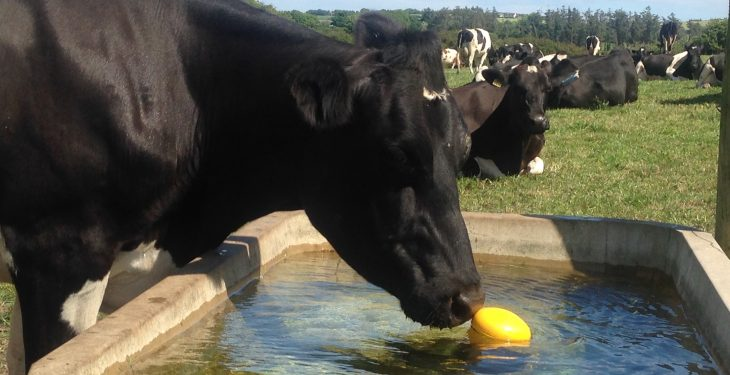 'Increased milk prices a sign processors fear farmers will cut back supplies'
