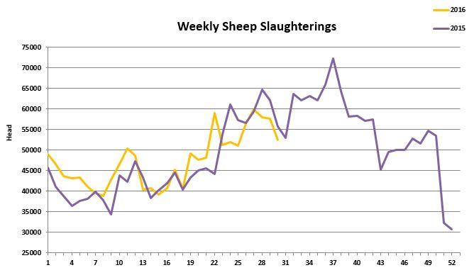 Sheep kill 882016