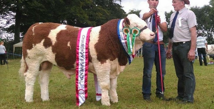 70th annual Tullow Show to take place this weekend