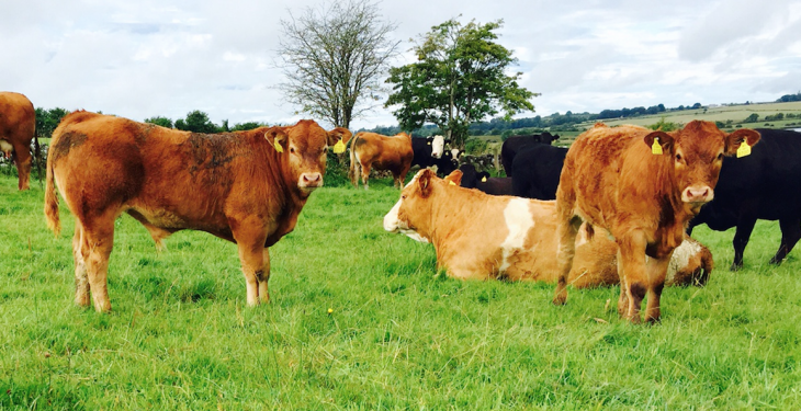 What lies ahead for the Irish beef sector in 2018?
