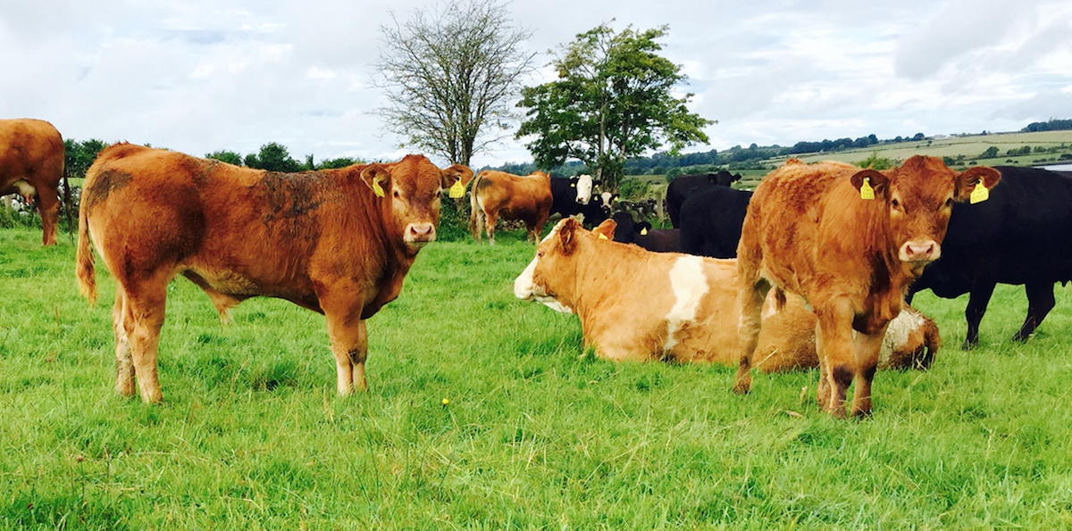 Government must take beef income crisis to Europe – Woods