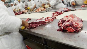 'It's all just for show': Meat plant workers speak out about workplace safety measures