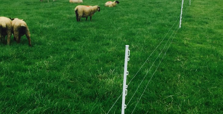Should more sheep farmers install a paddock grazing system?