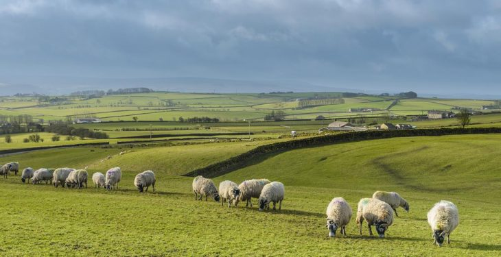 Irish climate action agri plan to be based on Teagasc Roadmap