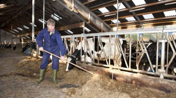 Only 37% of farms economically viable last year – Teagasc