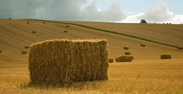 What is the fertiliser value of straw?