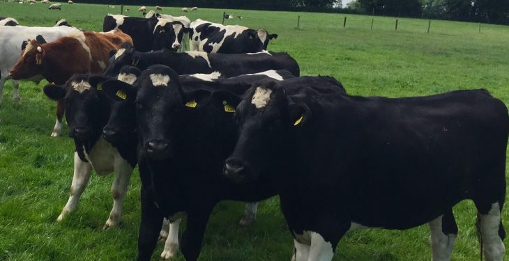 UK/Irish beef price differential rises to 60c/kg