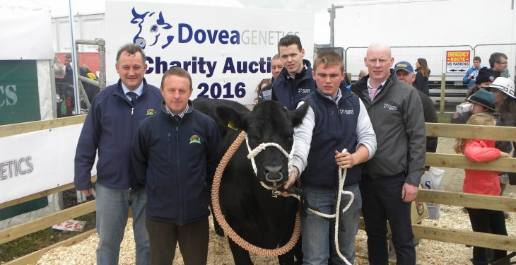 Dovea Genetics heifer auction raises over €16,000 for Bothar