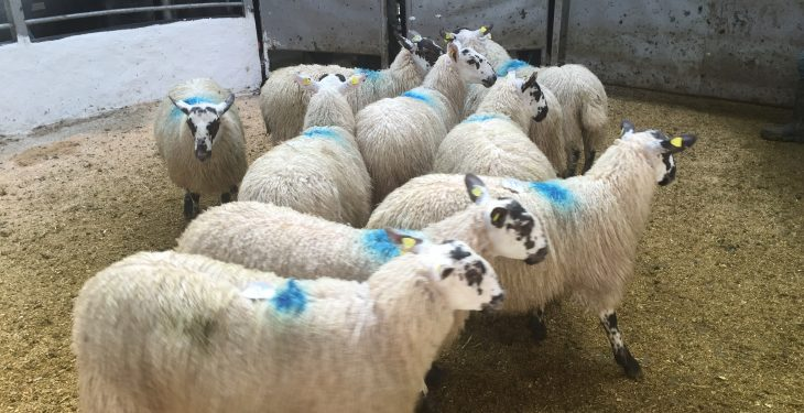 First signs of falling lamb prices as some quotes fall 5c/kg