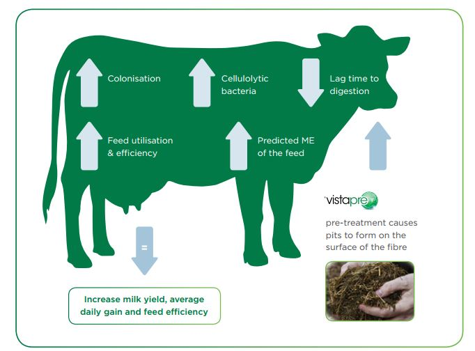 improve-productivity-from-forage