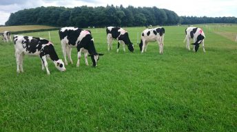 'Heifer rearing is a hidden cost on many dairy farms'