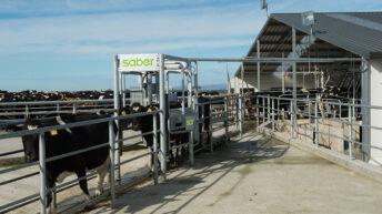 Dairy draft developments: Saber unveils new user interface