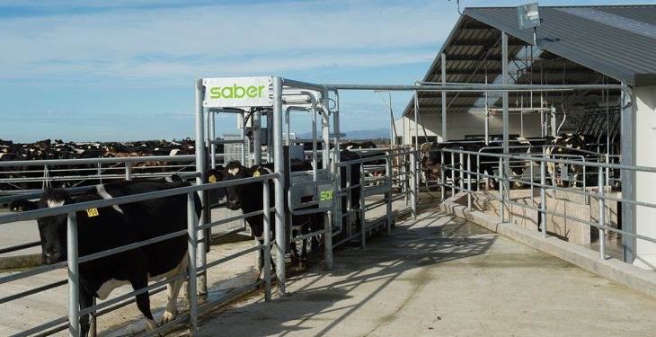 Dairy draft developments: Saber unveils new user interface