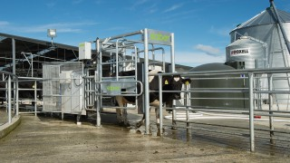 New Zealand's LIC Automation to launch automated heat detection system