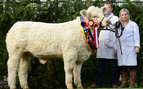 Charolais breeders set to flock to Roscommon for National Show