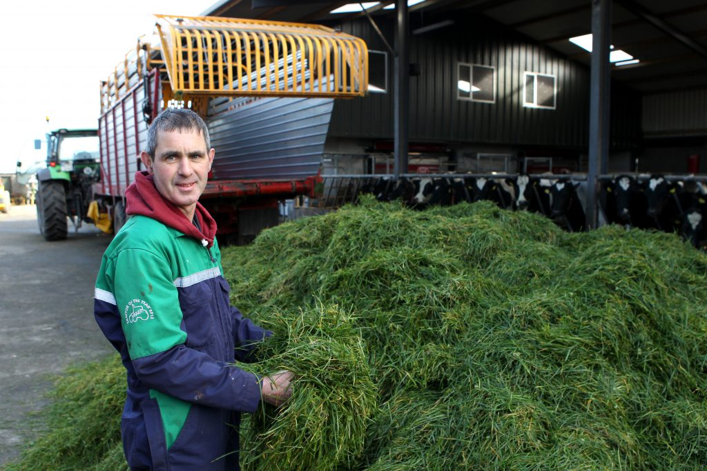 Tim Mannion on his farm in Co. Offaly