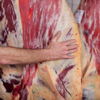 New grading system shows 'increased rate of accuracy' – Beef Plan
