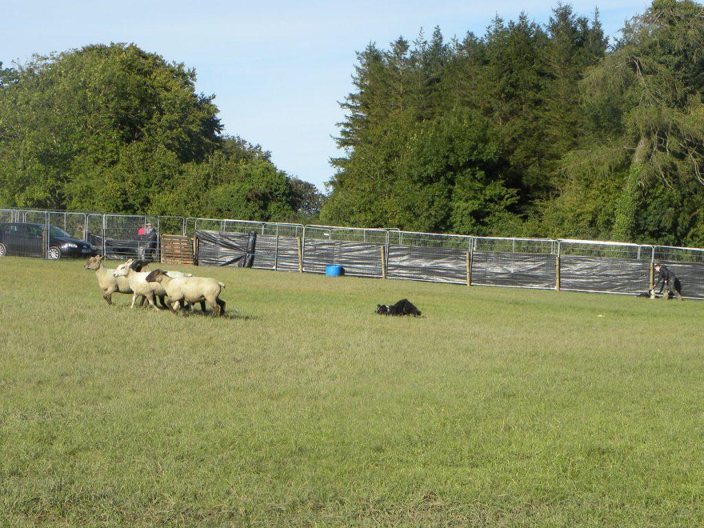 sheepdog, ploughing