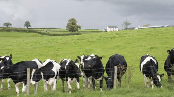 Agricultural land values fall in 2019 – Sherry FitzGerald