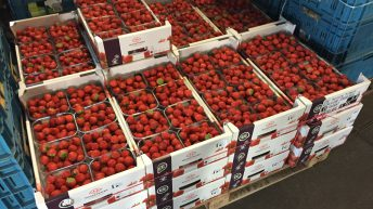 Behind the scenes at one of Europe's largest fruit and veg co-ops