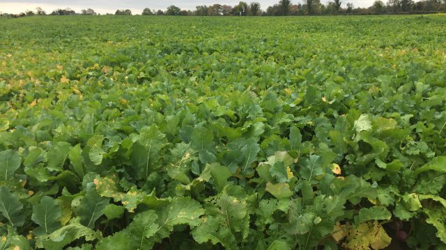 Have you considered sowing a fodder crop?