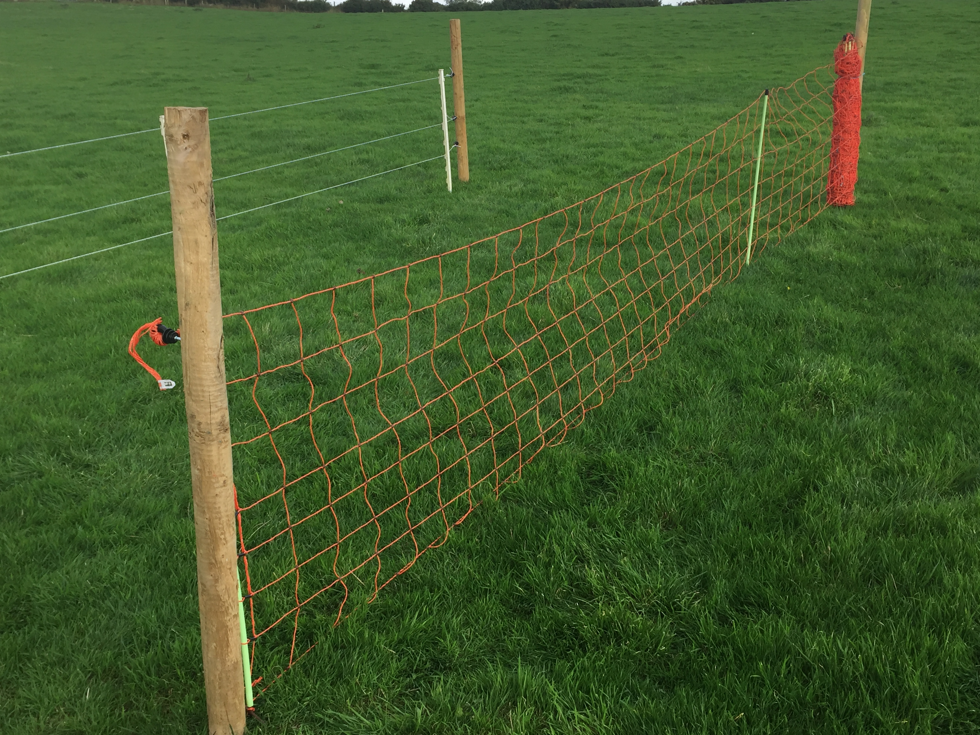 Pics: Cost-effective temporary sheep fencing options on show