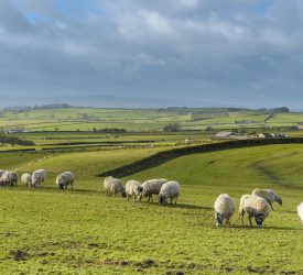 Met Éireann: Mainly dry week in store with showers in west