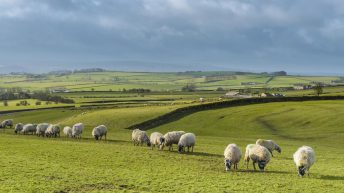 Department updating farm mapping for EU schemes