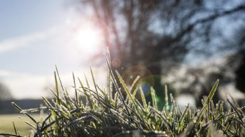 There's severe frost forecast in parts this week