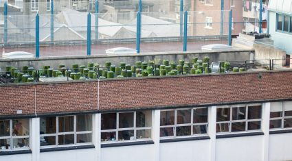 Pics: Growing potatoes on a roof and harvesting honey on one urban farm
