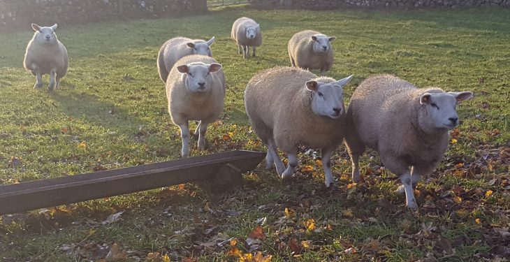 19-years-old and breeding one of the best Texel pedigree flocks in the country