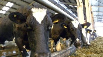 October milk production falls below 2015 levels