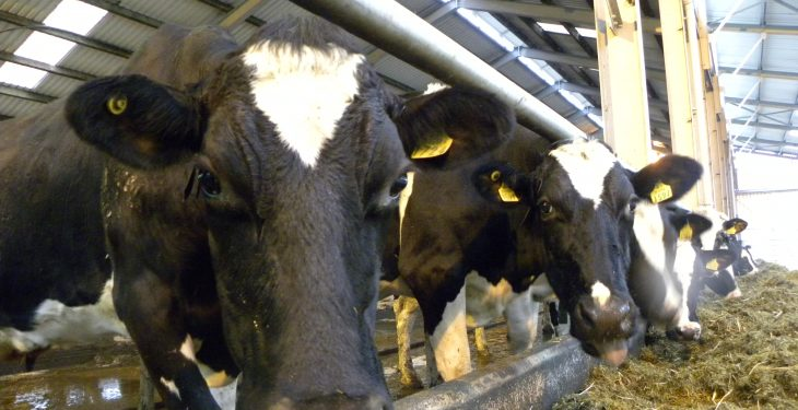 Strathroy plans to secure more milk volumes in the Republic