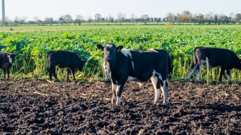 Forage crops a key part of Tipperary dairy calf to beef operation