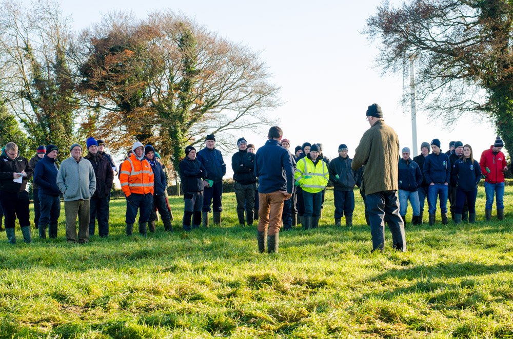 Farmers keen to learn of the benefits of out-wintering cattle on forage crops