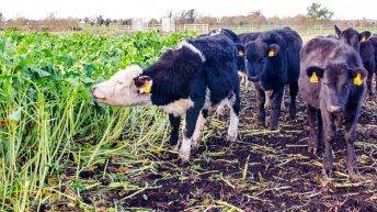 Department begins inspection of fodder crops