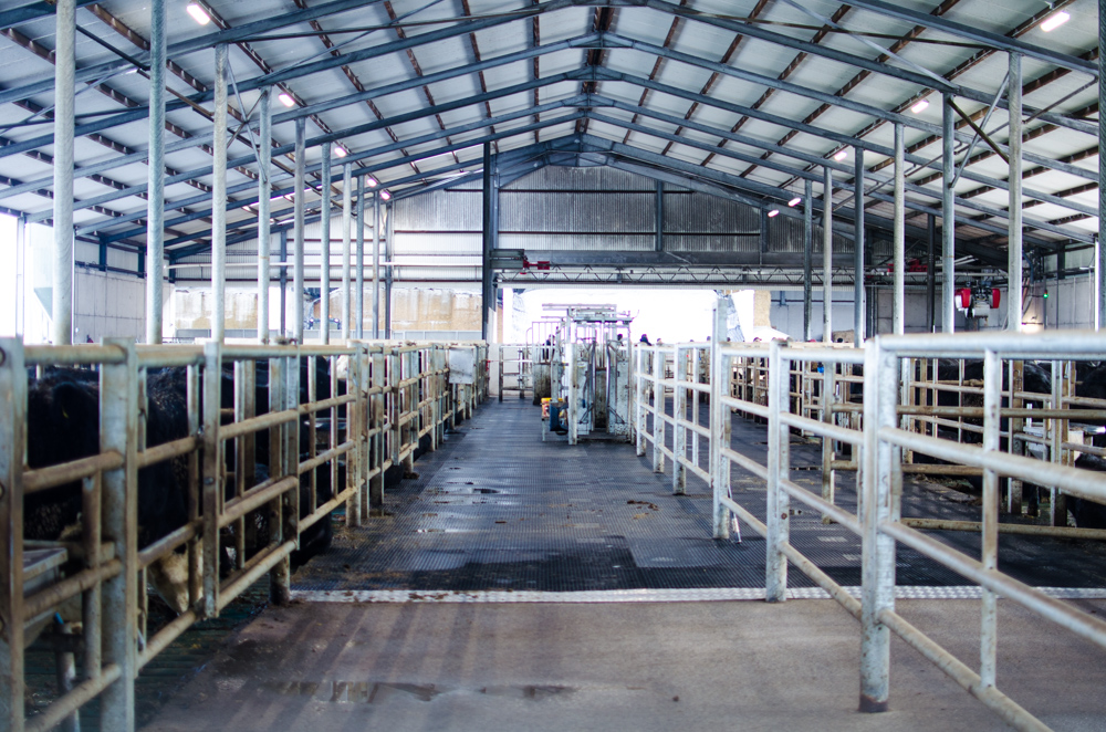Lame or sick stock can be easily treated in the farm's centrally located handling facility