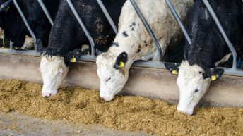 Farmers have just days left to secure December Genomics payments