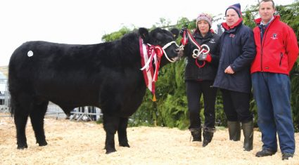 A bull for every farmer at the Irish Angus Cattle Society Elite Sale
