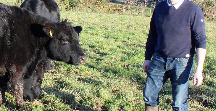 Ireland to co-host the World Angus Forum next year