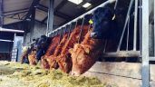 'Farmers are going to have all their fodder used by Christmas'