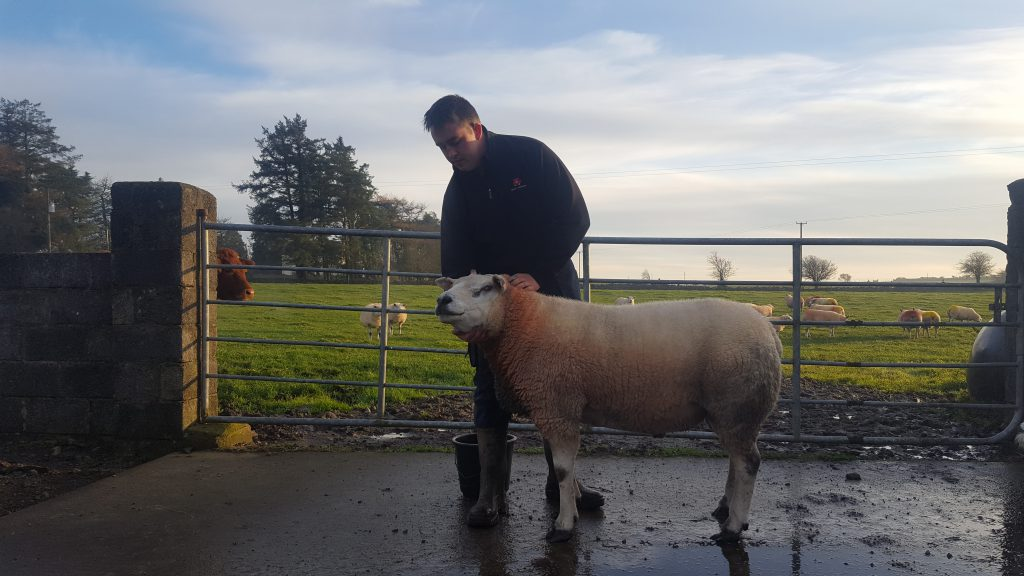 Cunniffe alongside his stock ram which he bought at the Premier Sale in Blessington, Co. Kildare.
