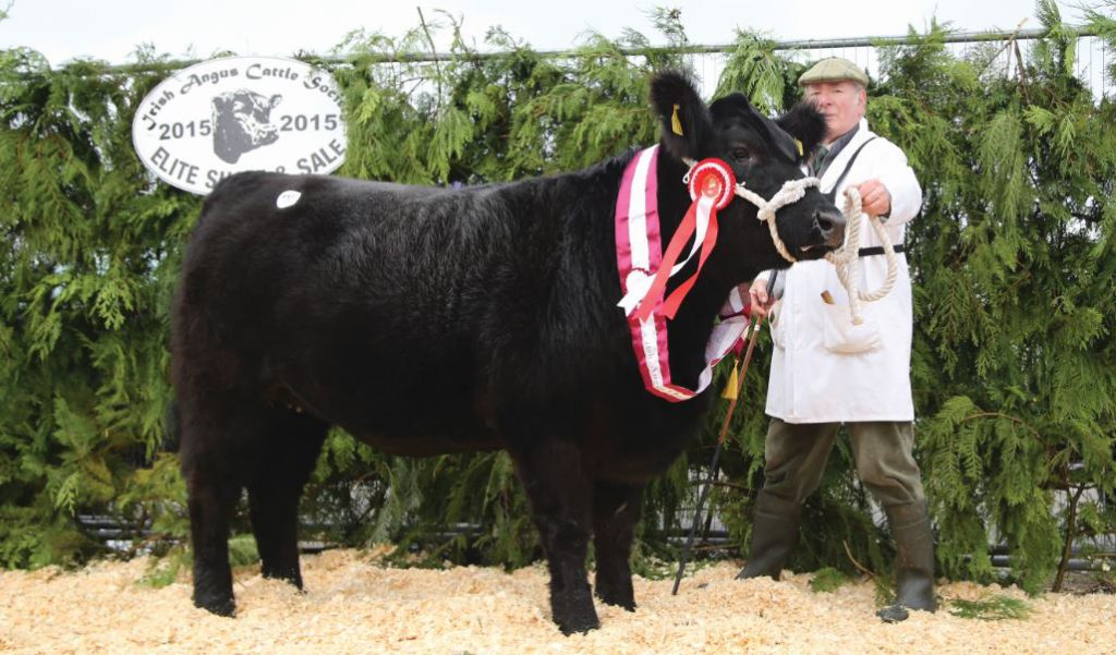 The Elite Female Champion with breeder Michael Flanagan