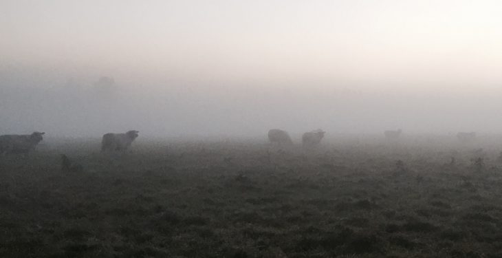 Fog warning in place ahead of cold but largely dry weekend